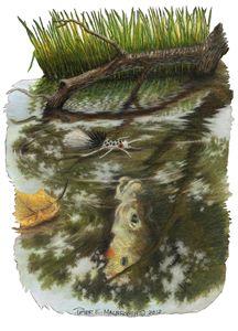 Sunfish Memory