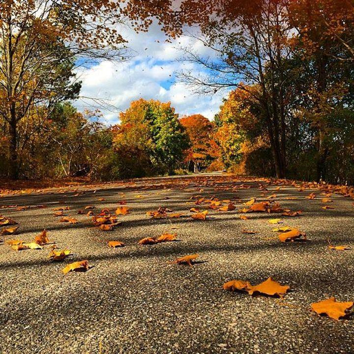 Fall Road - K.Bel