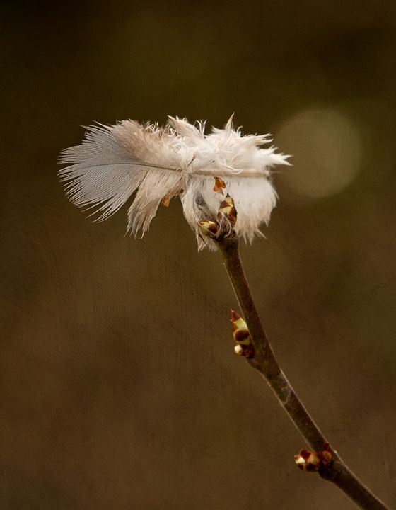 The Balance of Nature - Rosewood Photographics