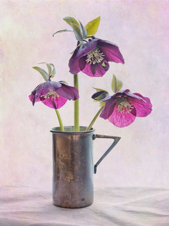 Hellebore Trio in Copper Cup - Rosewood Photographics
