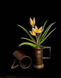 Tulips in old copper cup
