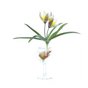 Species tulip in a tulip-shaped glas
