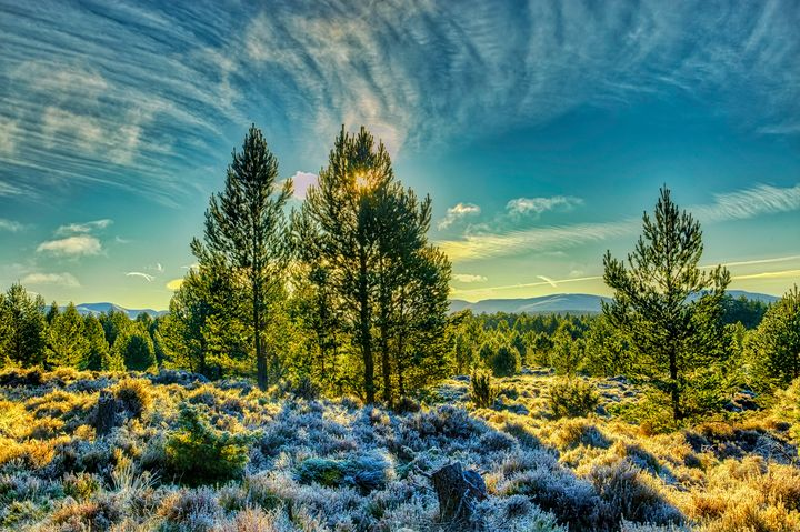 Winter sunshine on a frosty forest - Rosewood Photographics