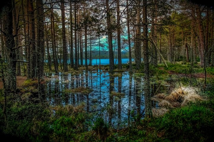 Woodland reflections - Rosewood Photographics