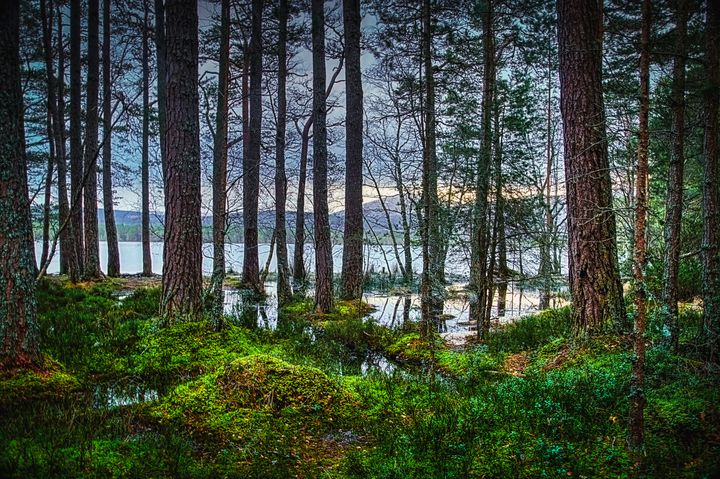 Flooding into the forest - Rosewood Photographics