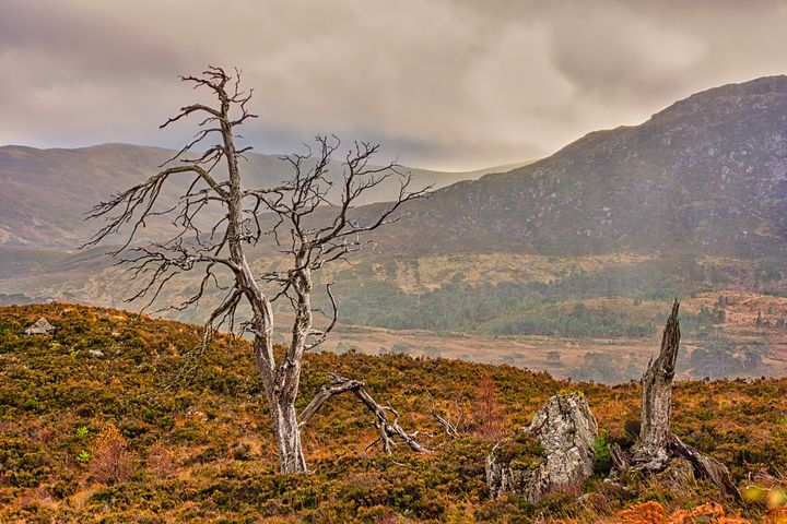 Dead Trees in the Highlands - Rosewood Photographics
