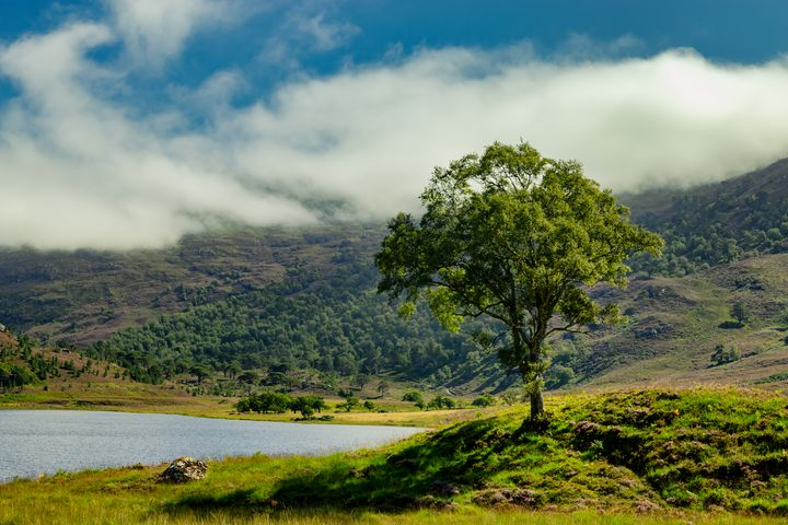 Lone Tree in a Highland Glen - Rosewood Photographics