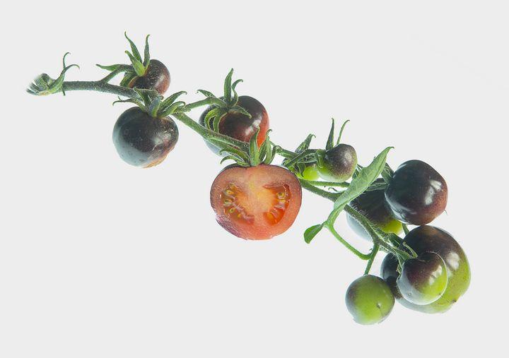 "A truss of tomato "" Indigo Rose"". - Rosewood Photographics"