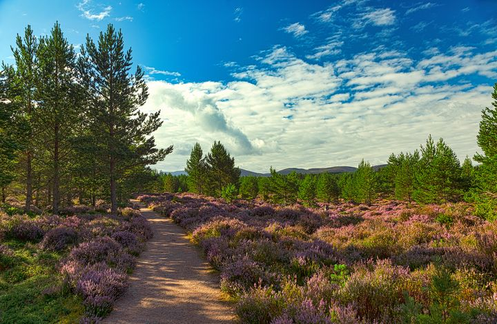 Path through the heather - Rosewood Photographics