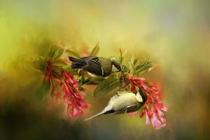 Great Tits on Flowers - Rosewood Photographics