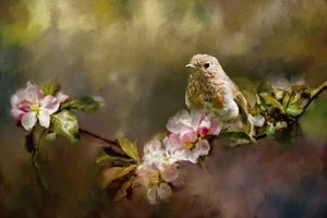 Young Robin on Apple Blossom