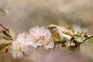 Young Robin with Blossom