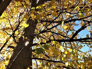 """Essence Of A Tree"""