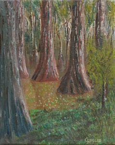 Cypress Symmetry