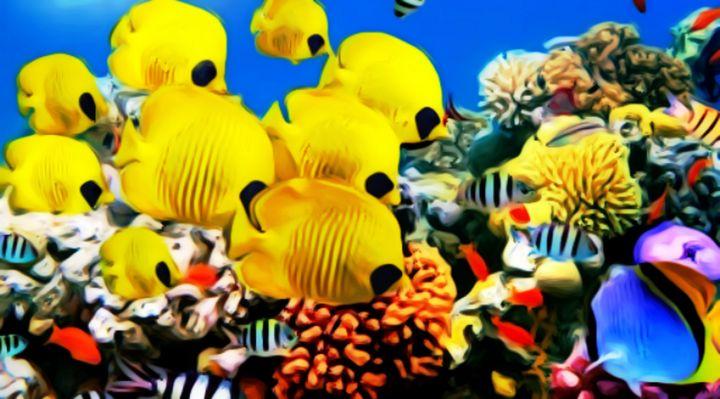 Coral fish - Alina