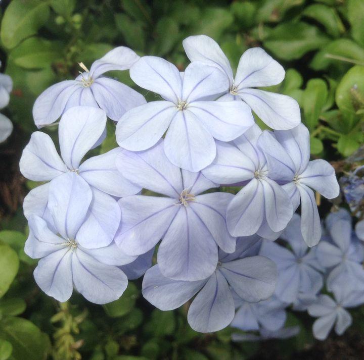Lilacs - I am Noona