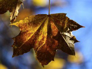 Autumn.7