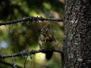 Squirrël