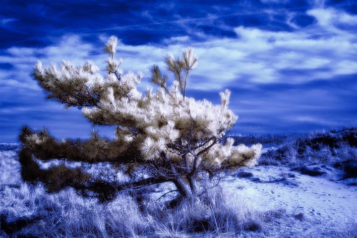 Windswept Dune - chuck_lembo