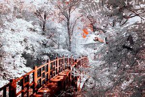 Lake Trail Bridge