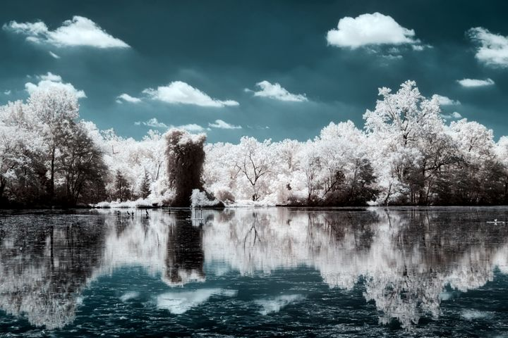 Willow Pond - chuck_lembo
