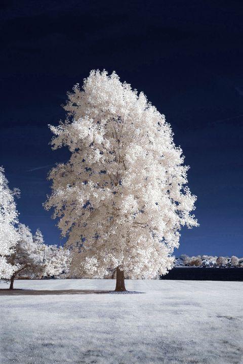 Tree - chuck_lembo