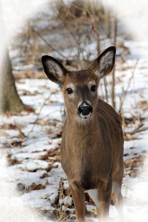Snow Deer - Nature and Wildlife Art