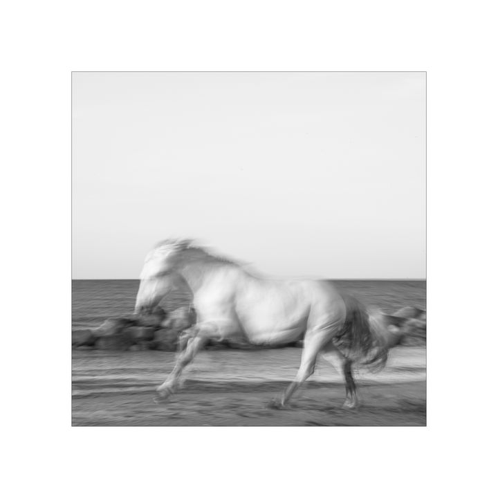 Ghostly Horse - jennialexander