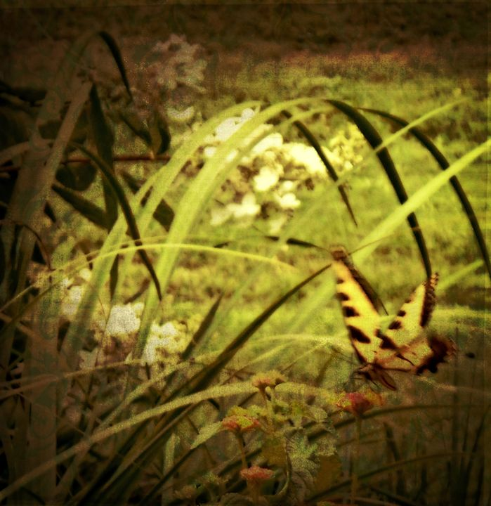 Butterfly Dream - WhiteOaks Photography and Artwork, LLC