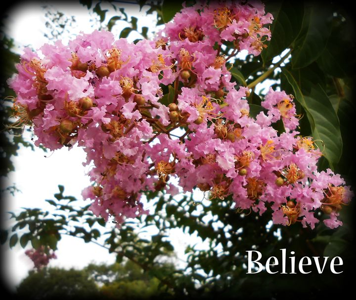 Pink Crepe Myrtle-Believe - WhiteOaks Photography and Artwork, LLC