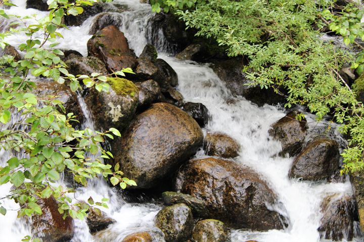 Alaskan Rain Forest Stream - Pat Hansen's Photos