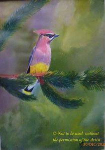 Pink Head Bird (A3)