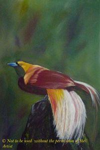 Gorgeous Bird of Paradise (A3)