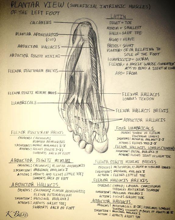 Left Foot (Musculature) - K Bass Art