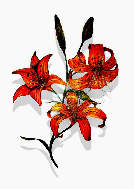 Tiger Lilies - Fisher Artworks