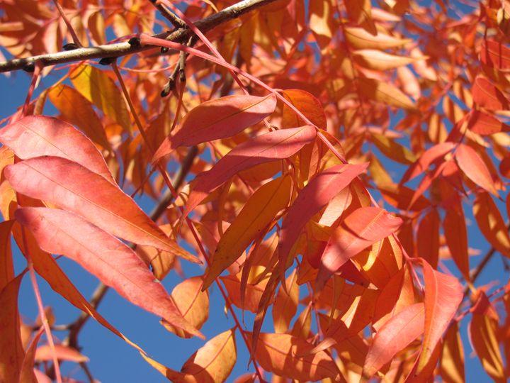 Autumn - Bryn's Photos