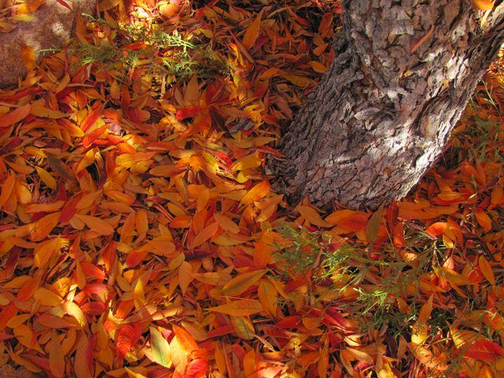 Fall - Bryn's Photos
