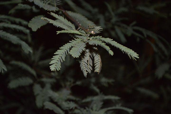 Leaf - Bryn's Photos