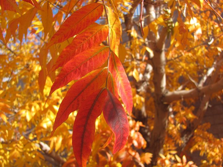 Gleaming Leaves - Bryn's Photos