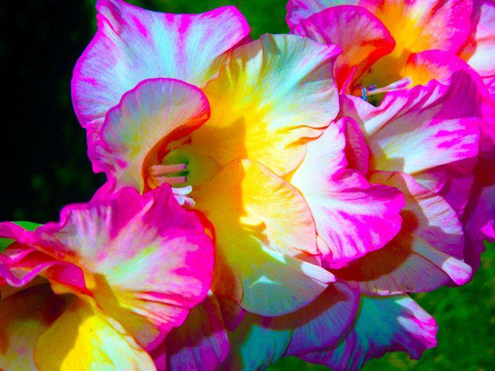 Fuchsia - Don Wright Fine Art & Photoraphy