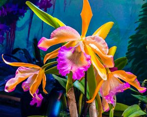 Linda's Orchids - Don Wright Fine Art & Photoraphy