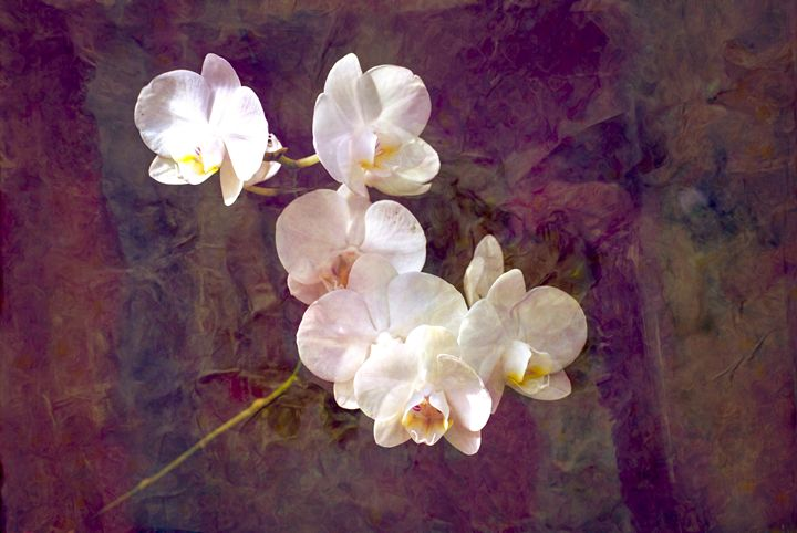 Tranquility Phalaenopisis Orchid - Don Wright Fine Art & Photoraphy