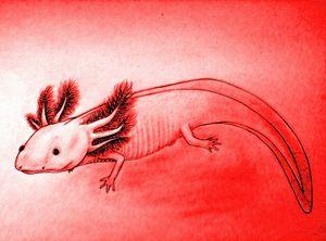 Mr. Pink Axolotl