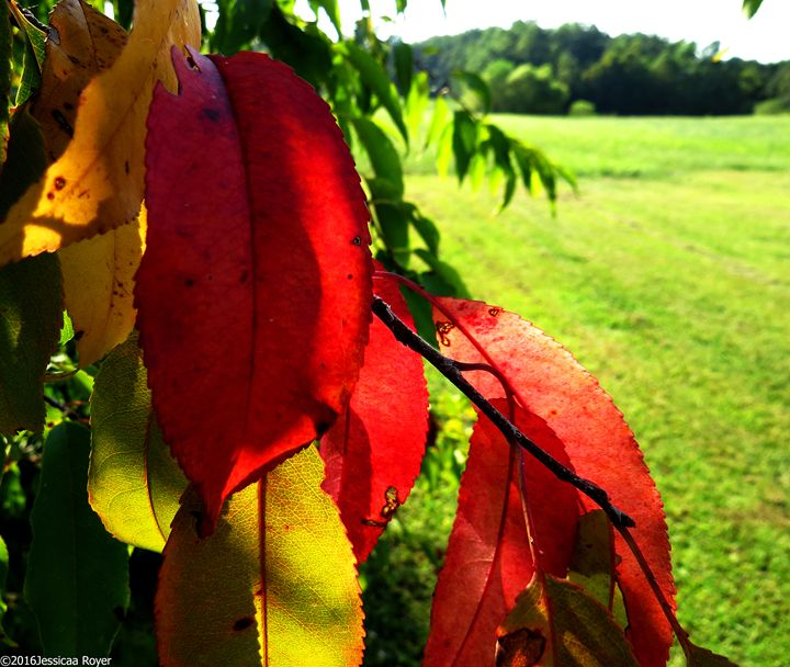Colors of Fall - Jessica Royer