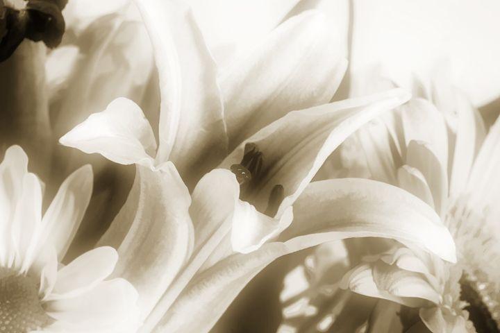 Flower 5561.006 - M K Miller III