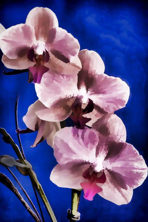 Flower 5561.014 - M K Miller III