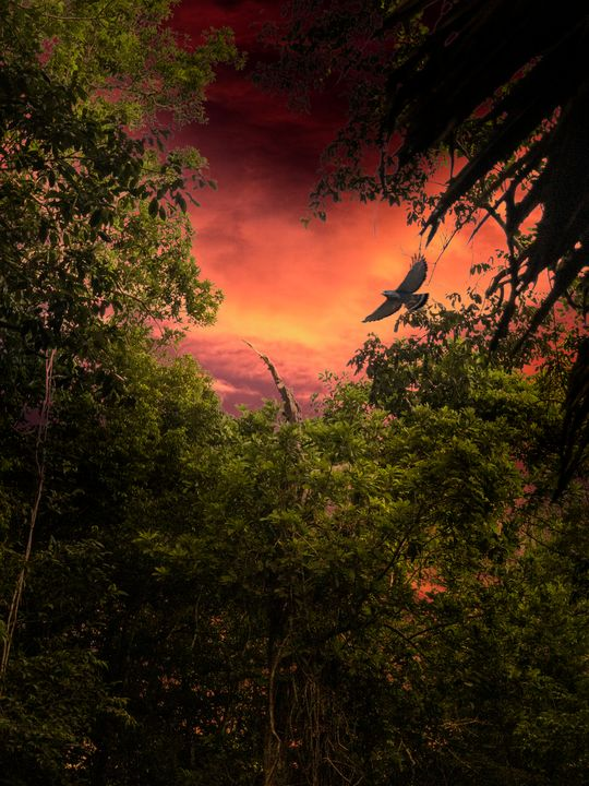 Sunset in the Jungle - Michael A. Maurus Photography
