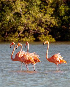 Flamingos in the wild