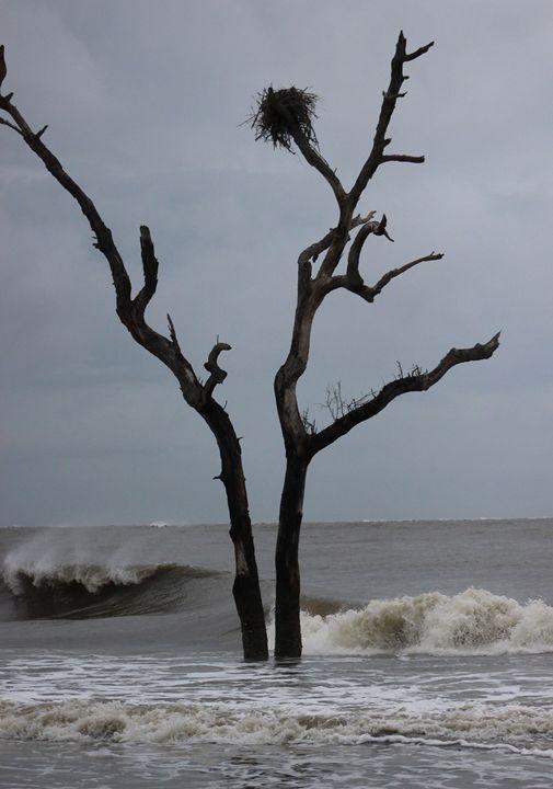 Hurricane Winds - Randall Messina