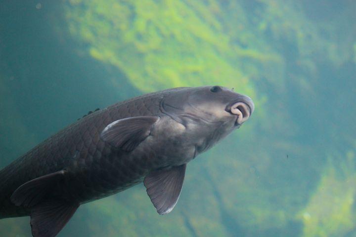 Silver Fish - Randall Messina